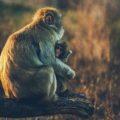 執着するに値するもの ~「猿の道」から「猫の道」へ~【2019会員専用記事】